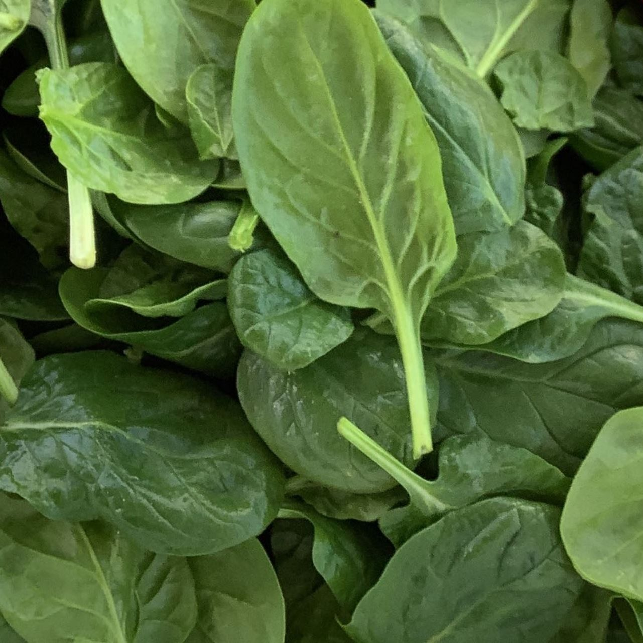 466 - 4 Lb. Pillow Baby Spinach